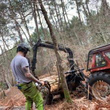 Joan Hubert, élagueur en Gironde en train d'abattre un arbre.